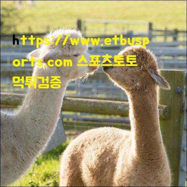 https://www.etbusports.com 스포츠토토 먹튀검증